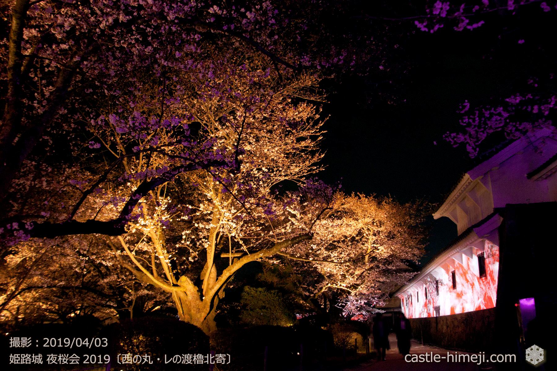 レの渡櫓壁面と桜・「姫路城夜桜会」初日2019/4/3