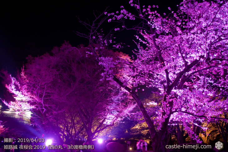 cherry-blossoms-night_1st_16