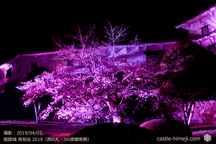 cherry-blossoms-night_1st_17