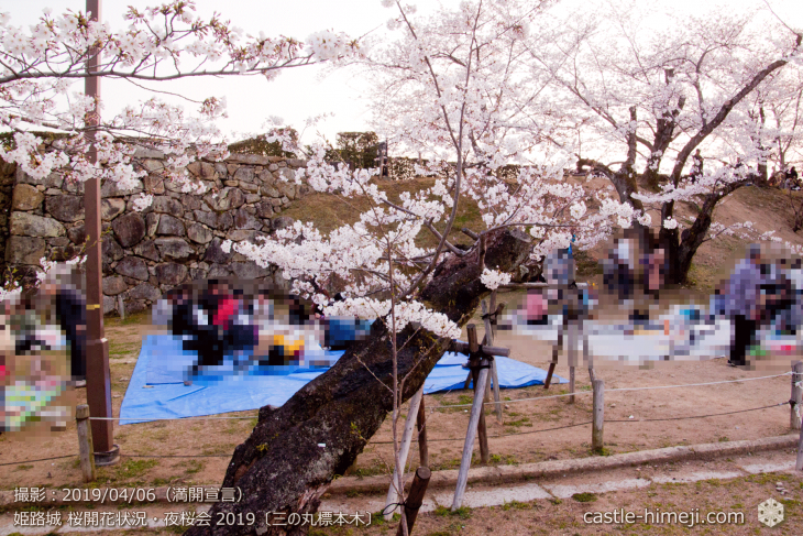 cherry-blossoms-night_2st_01