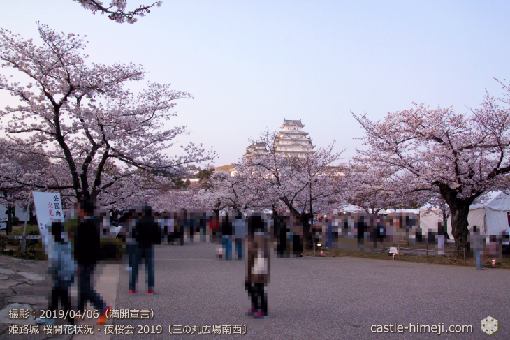 cherry-blossoms-night_2st_03