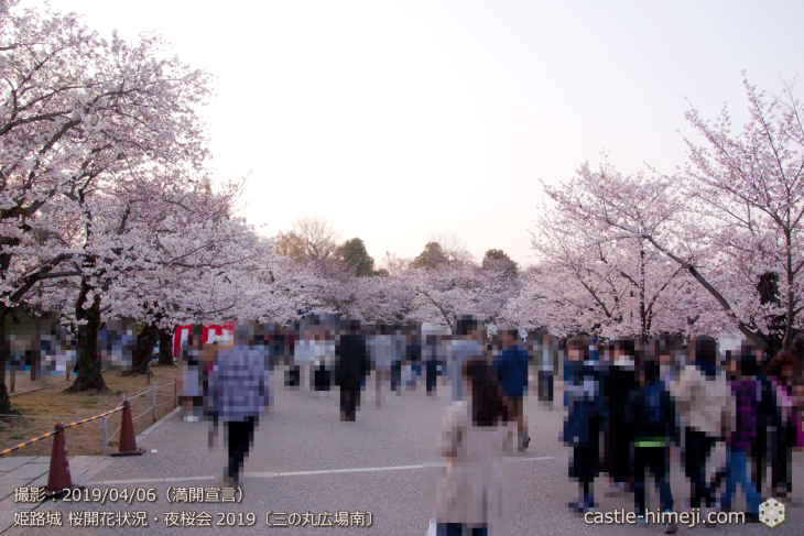 cherry-blossoms-night_2st_04