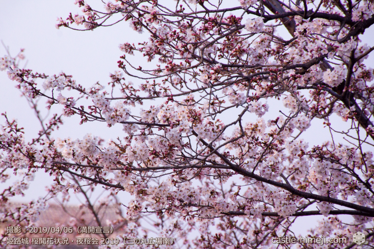 cherry-blossoms-night_2st_05