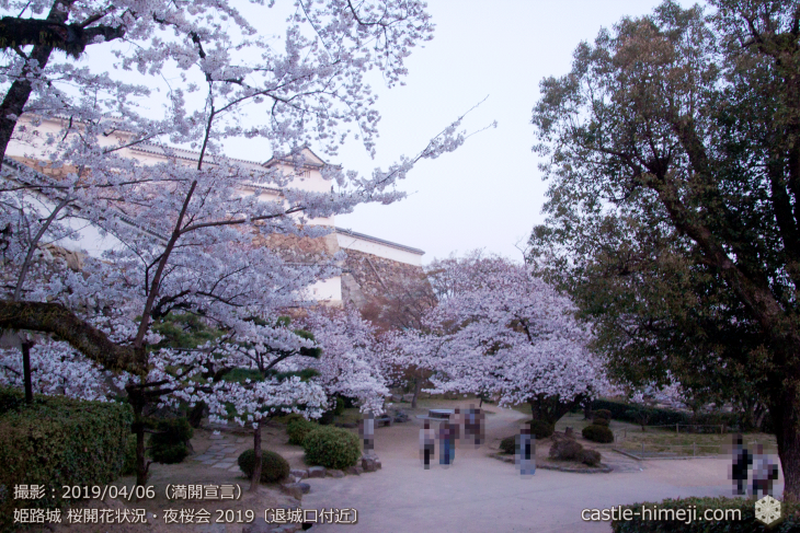 cherry-blossoms-night_2st_07
