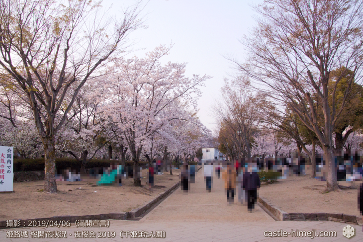 cherry-blossoms-night_2st_08