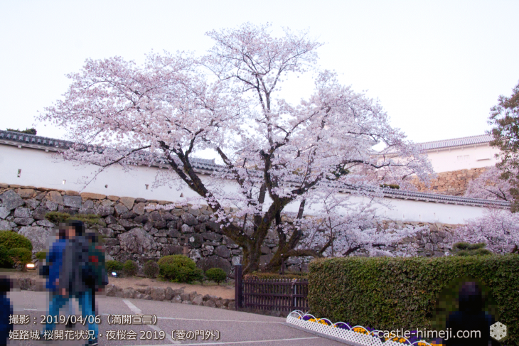 cherry-blossoms-night_2st_10