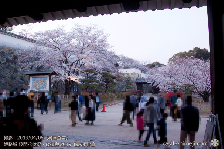cherry-blossoms-night_2st_11
