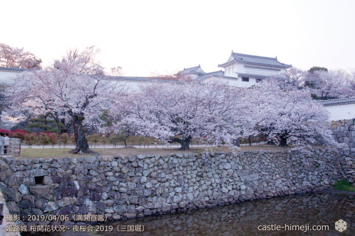 cherry-blossoms-night_2st_12