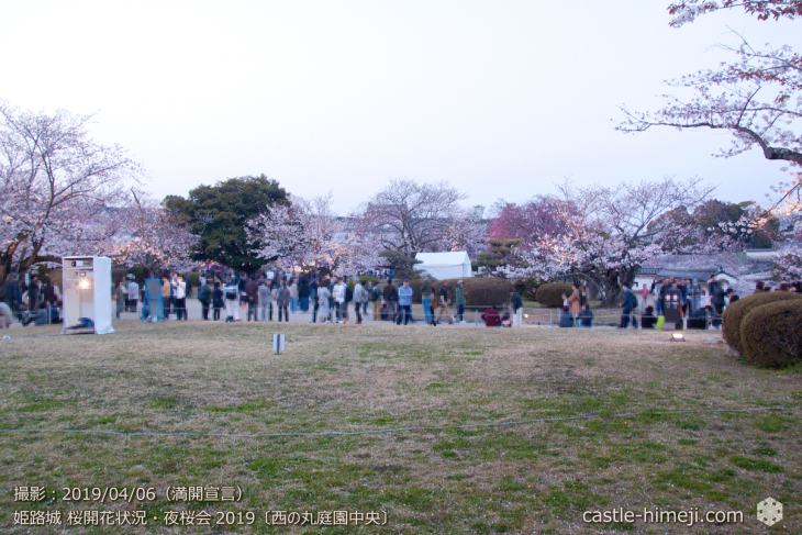 cherry-blossoms-night_2st_13