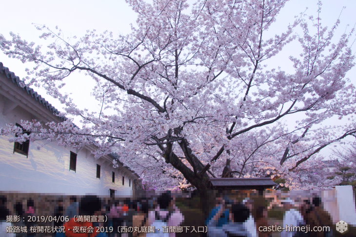cherry-blossoms-night_2st_14