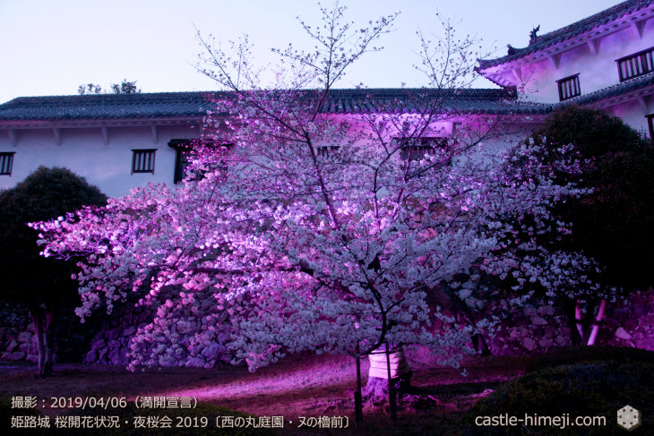 cherry-blossoms-night_2st_15