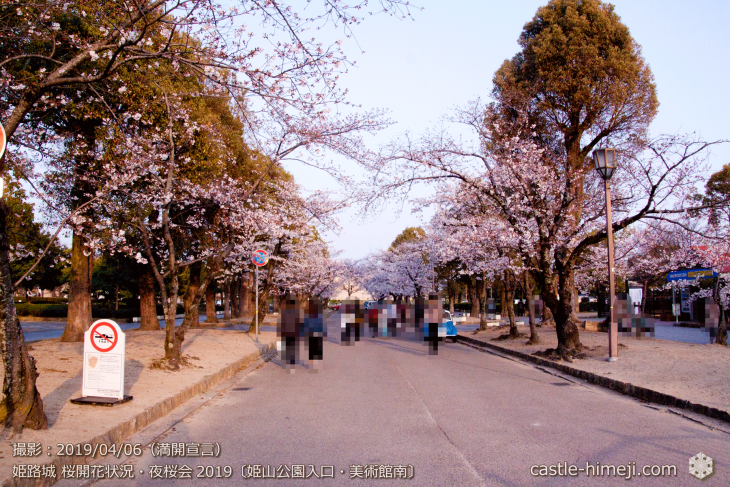 cherry-blossoms-night_2st_19
