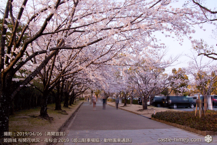 cherry-blossoms-night_2st_20