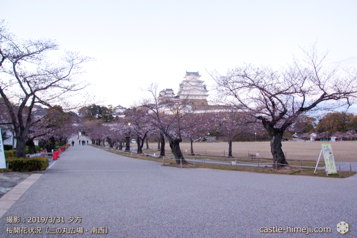 cherry-blossoms20190331_out1_04