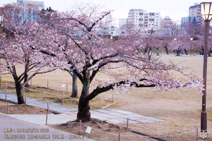 cherry-blossoms20190331_out1_05