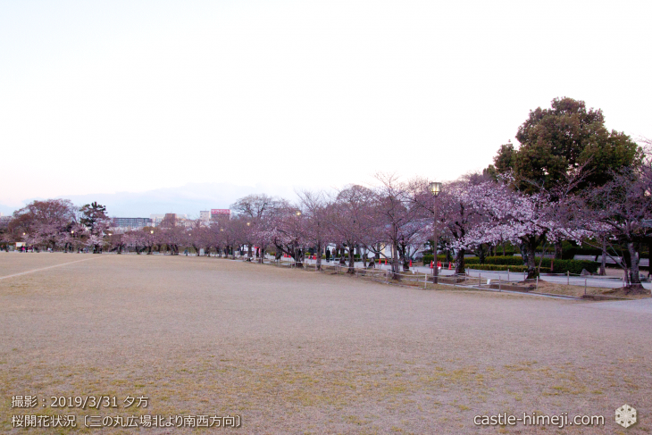 cherry-blossoms20190331_out1_07