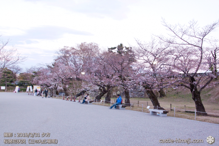 cherry-blossoms20190331_out1_08