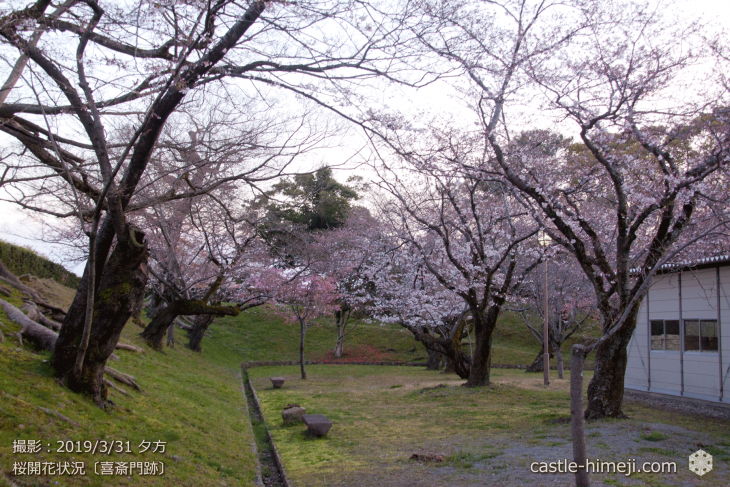 cherry-blossoms20190331_out1_18