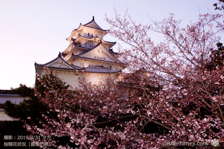 cherry-blossoms20190331_out1_19