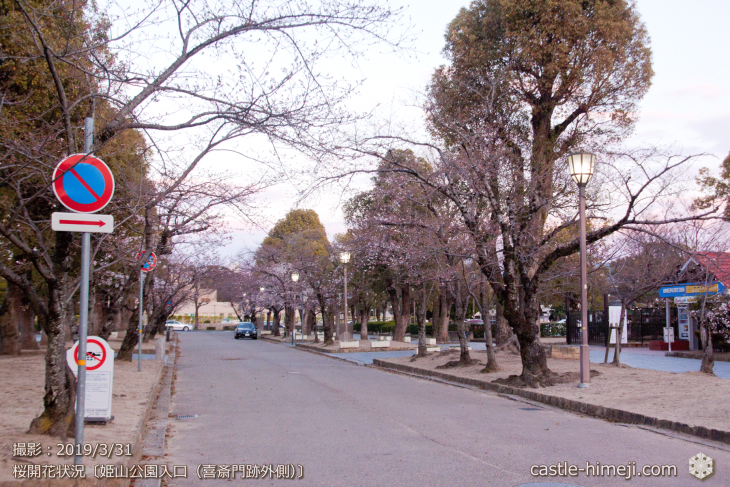 cherry-blossoms20190331_out2_02