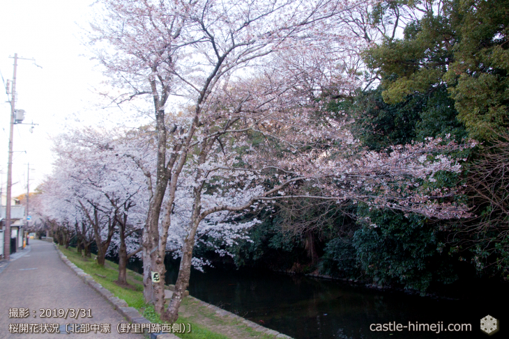 cherry-blossoms20190331_out2_07