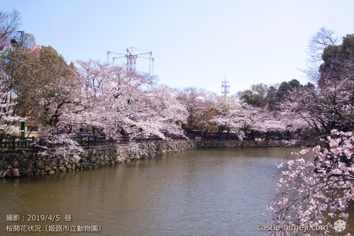 cherry-blossoms20190402_out2_02