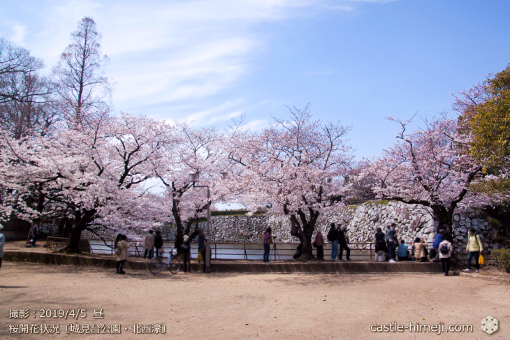 cherry-blossoms20190402_out2_07