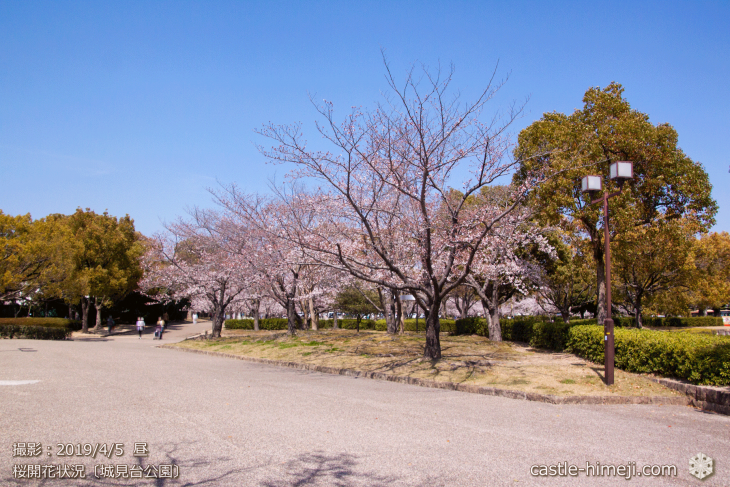 cherry-blossoms20190402_out2_09