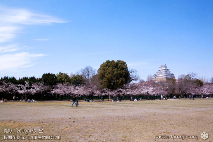 cherry-blossoms20190402_out2_11