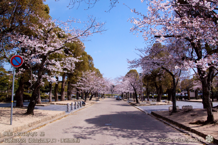 cherry-blossoms20190402_out2_15