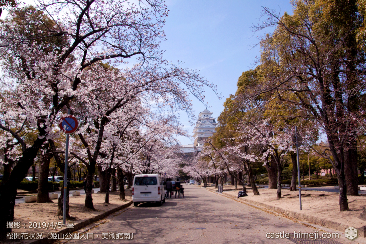 cherry-blossoms20190402_out2_16