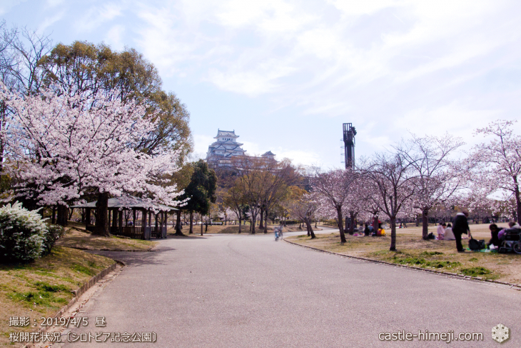 cherry-blossoms20190402_out3_03