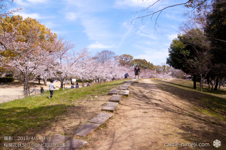 cherry-blossoms20190402_out3_05