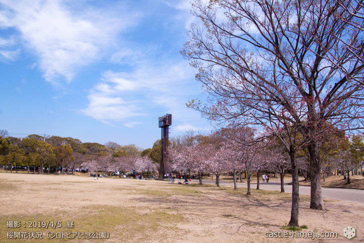 cherry-blossoms20190402_out3_08