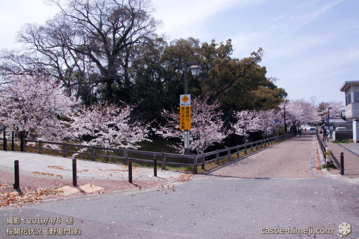 cherry-blossoms20190402_out3_10