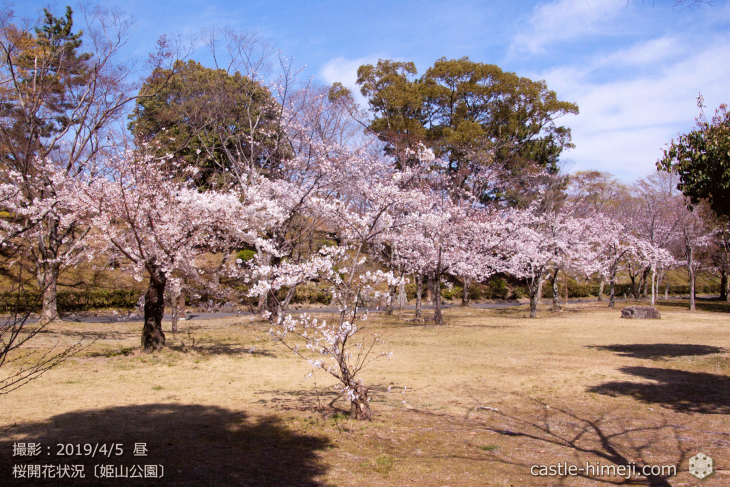cherry-blossoms20190402_out3_14