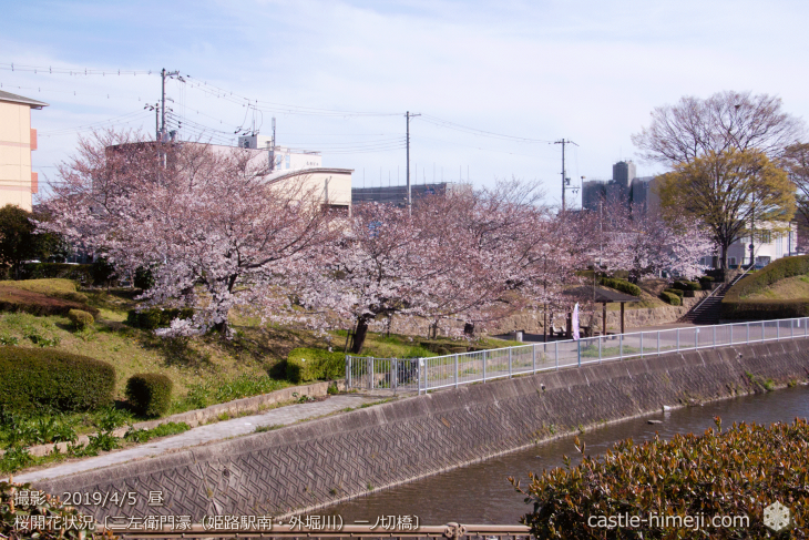 cherry-blossoms20190402_out4_08
