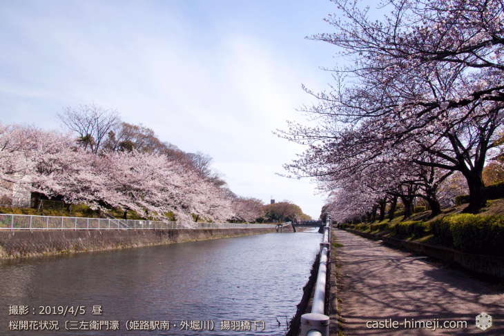cherry-blossoms20190402_out4_09