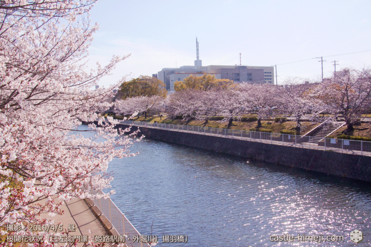 cherry-blossoms20190402_out4_12