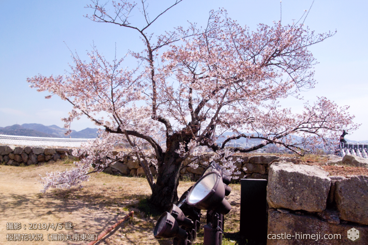 cherry-blossoms20190405_in1_09