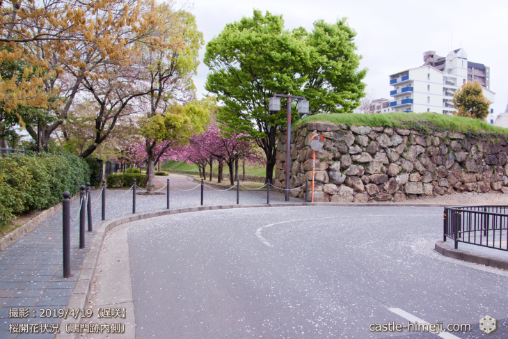 cherry-blossoms20190419_out1_23