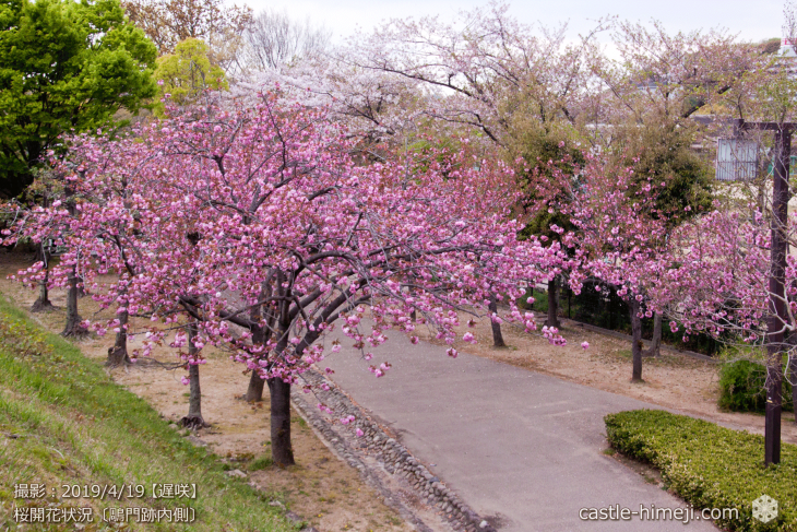 cherry-blossoms20190419_out1_25