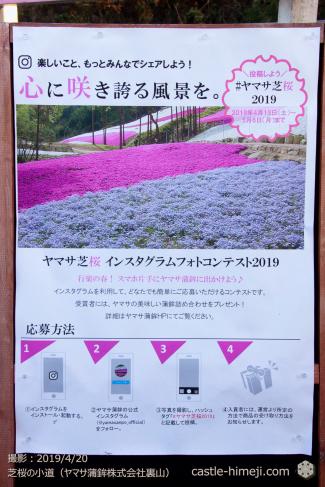 cherry-yamasa20190420_07