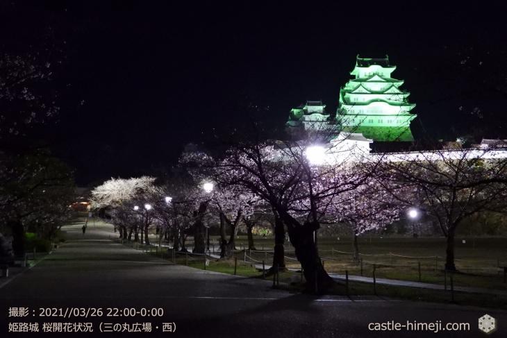 三の丸広場-西・姫路城・2021.3.26桜開花状況