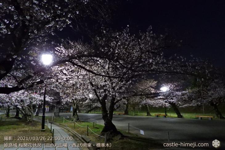 三の丸広場-西より南東標準木・姫路城・2021.3.26桜開花状況
