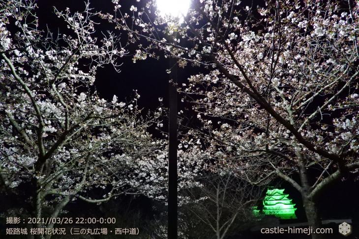 05_三の丸広場-西中道・姫路城・2021.3.26桜開花状況