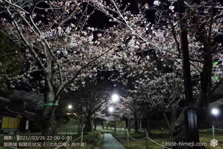 06_三の丸広場-西中道・姫路城・2021.3.26桜開花状況