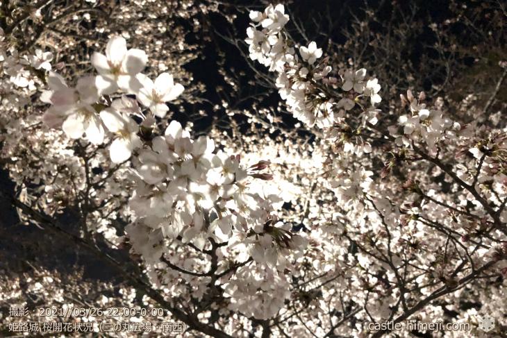 13_三の丸広場-南西咲いている桜拡大・姫路城・2021.3.26桜開花状況
