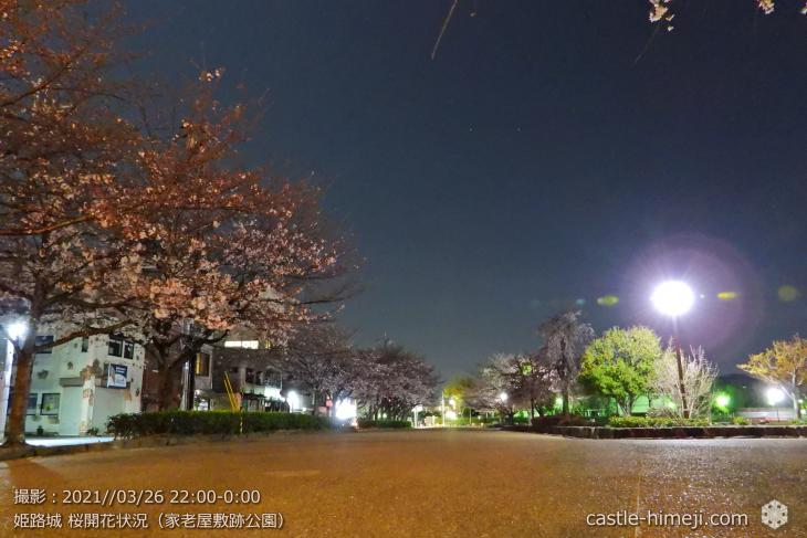 15_家老屋敷跡公園-南の桜並木・姫路城・2021.3.26桜開花状況
