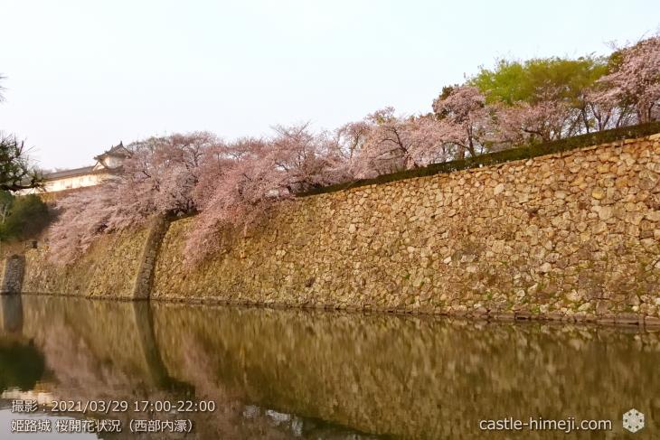 01_西部内濠・姫路城・2021.3.29桜開花状況